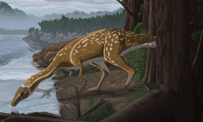 Редкий беззубый динозавр, обнаруженный в Австралии
