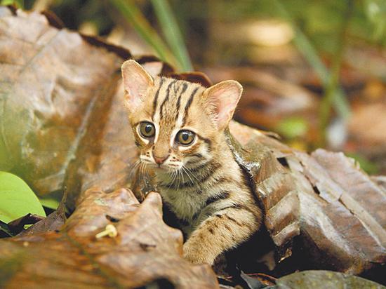 Познакомься с самой маленькой кошкой в мире