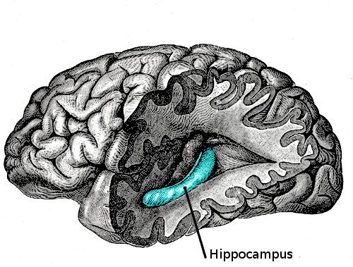 Ученые идентифицируют скопление нейронов, которые блокируют ужасные воспоминания в наших умах
