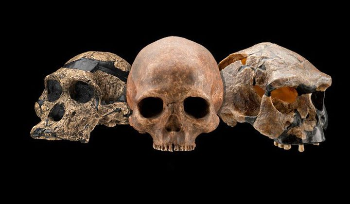 Крупнейшие открытия десятилетия в эволюции человека