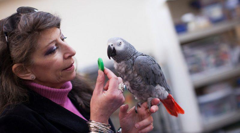 Попугаи умнее 5-летних детей?