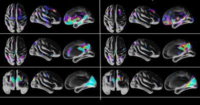 """Псилоцибин разрушает """"эгоцентр"""" мозга"""