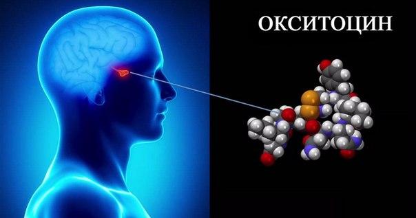 Окситоцин «гормон любви» также способствует агрессии