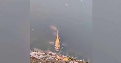 В Китае замечена жуткая рыба с «человеческим лицом»