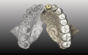 Исследователи смоделировали верхнюю челюсть для Misliya-1, используя самые старые окаменелости человека за пределами Африки.