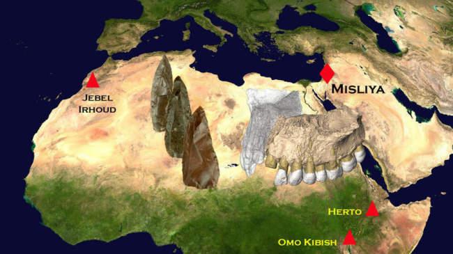 Частичная челюстная кость и зубы в пещере Мислия в Израиле