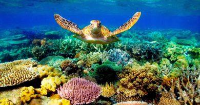 Знаете ли вы, что солнцезащитный крем делает с коралловыми рифами?