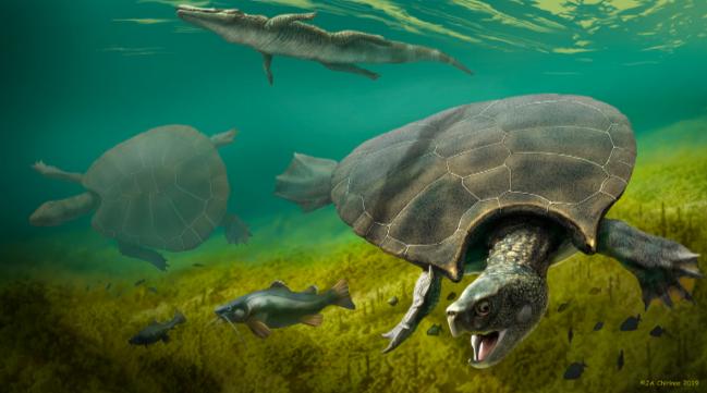 Гигантские черепахи вели эпические битвы 10 миллионов лет назад, и у них есть шрамы