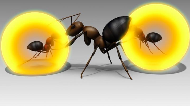 Эти муравьи «взрываются», чтобы защитить свою колонию