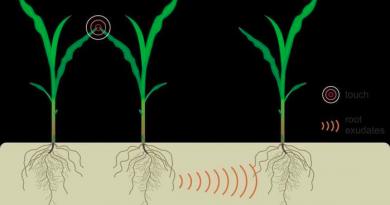 Растения демонстрируют подземное общение со своими соседями