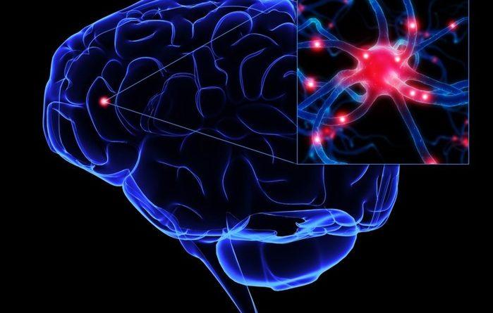 нейрон, мозг