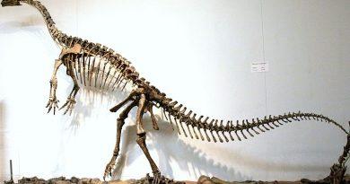 Schleitheimia платеозавр динозавр