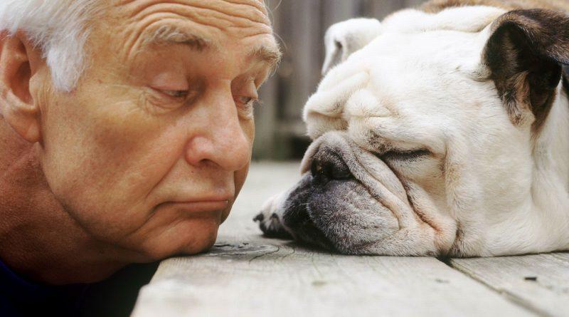 собака и человек