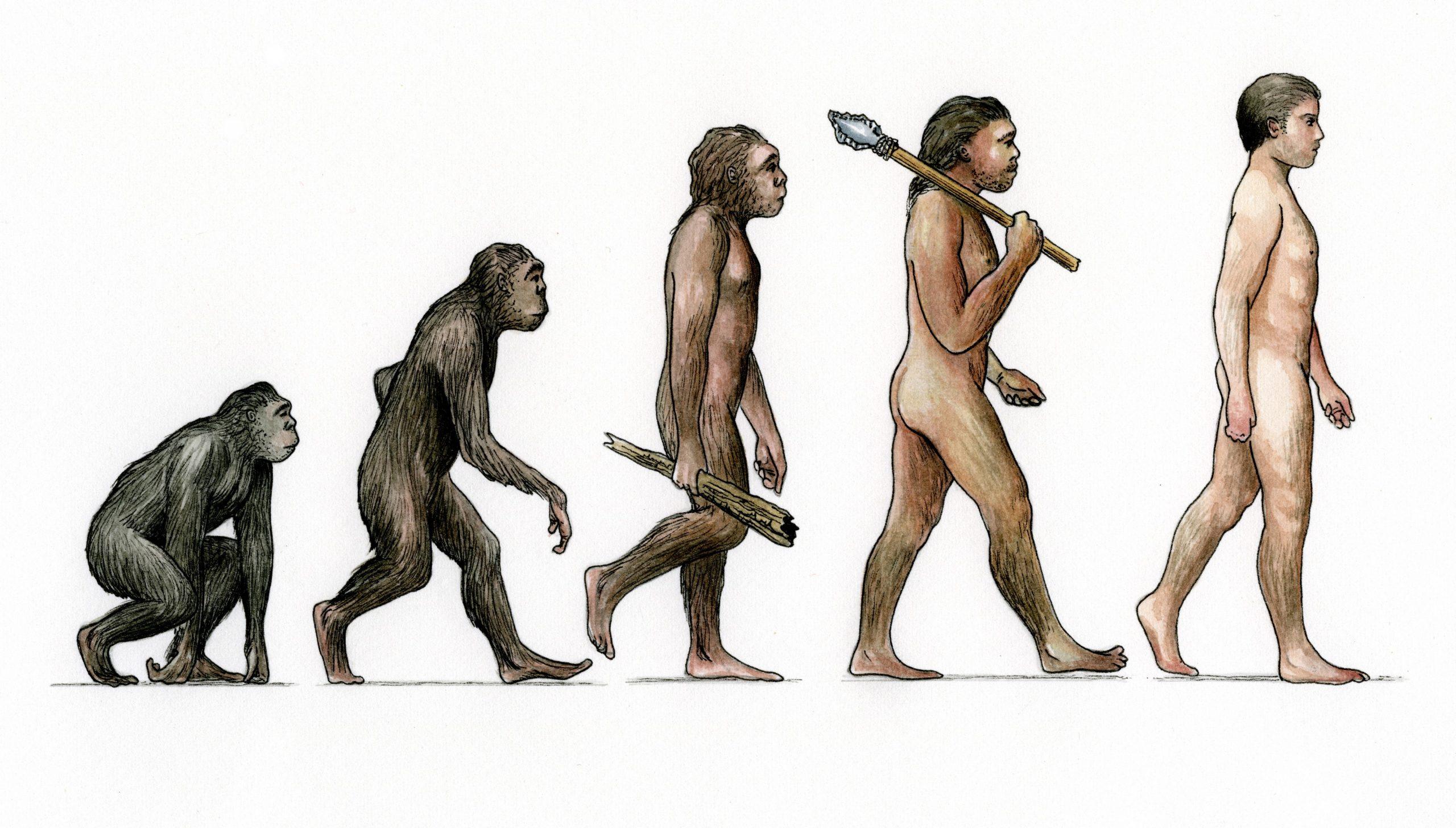 биологическая эволюция фото пытается