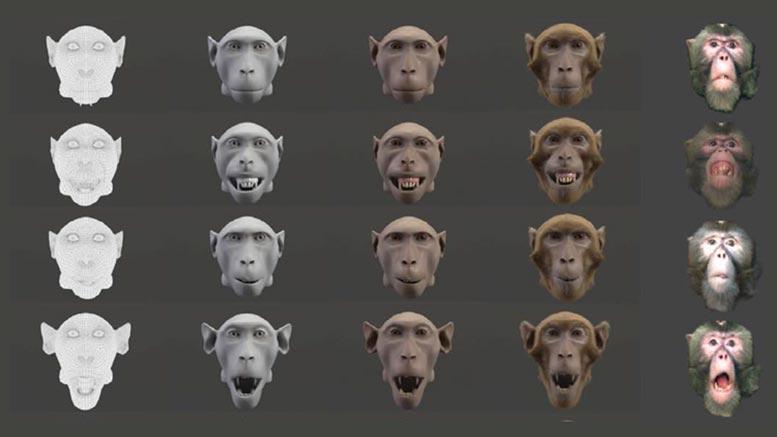 графика обезьяны