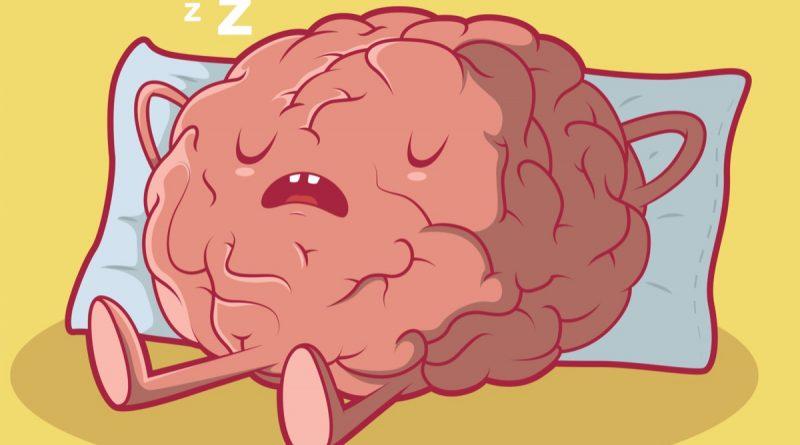 мозг спит