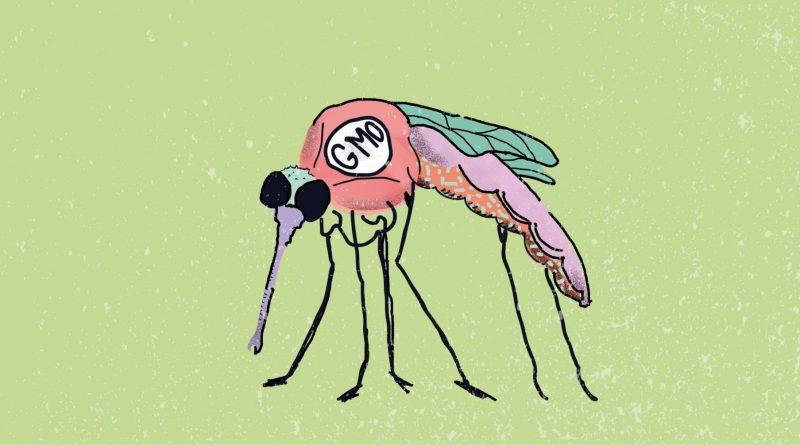 гмо комар