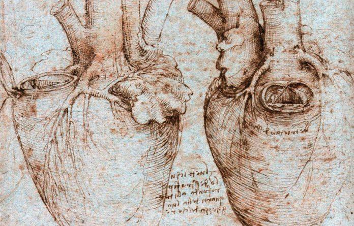 Сердечные мышцы, нарисованные да Винчи, играют жизненно важную роль в работе сердца