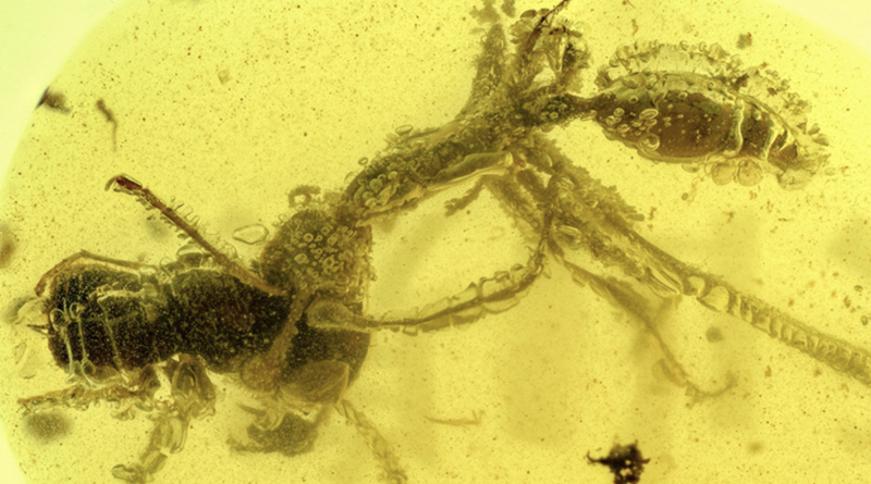 муравей в янтаре