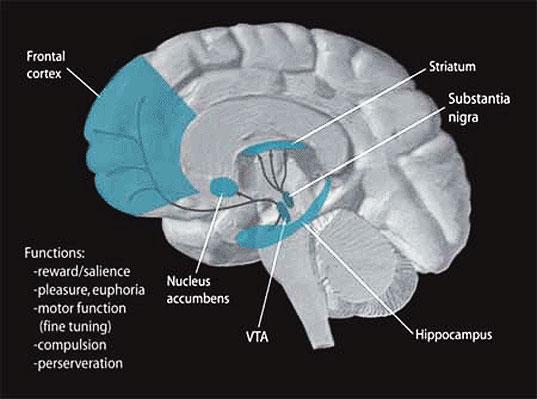 мозг удовольствие