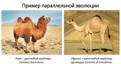 параллельная эволюция
