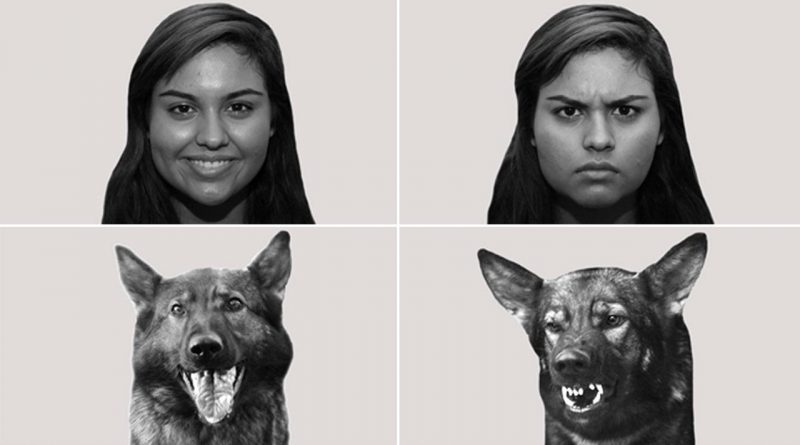 собаки эмоции