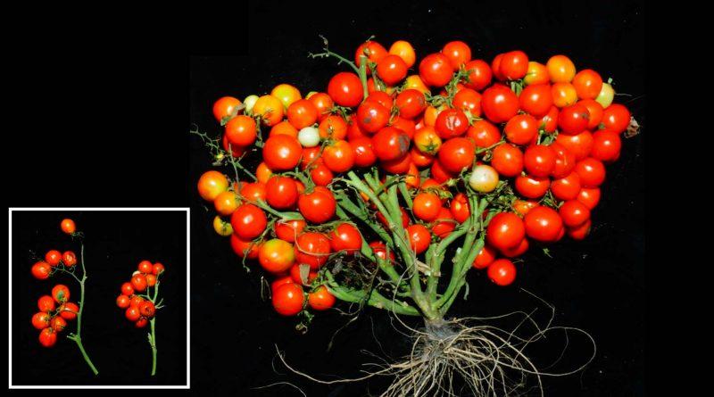 фото ГМО