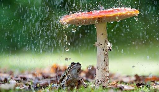 грибы вызывают дождь